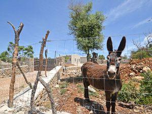 19895571-Ferienhaus-6-Artà-300x225-32
