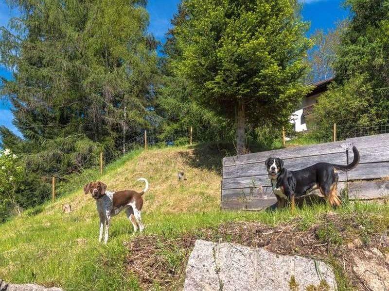18630487-Ferienhaus-16-Enzklösterle-800x600-7