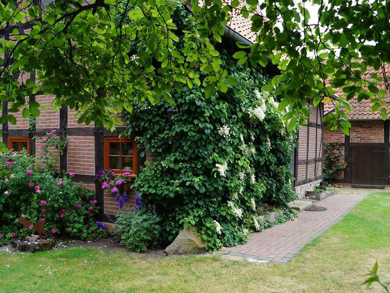18658930-Ferienhaus-4-Gilten-800x600-3