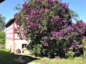 Ferienhaus für 4 Personen ab 98 € in Rosendorf