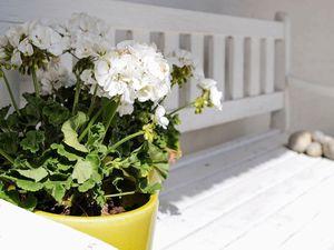 19315662-Ferienhaus-6--300x225-1
