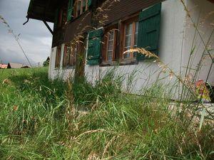 18984226-Ferienwohnung-5-Adelboden-300x225-1