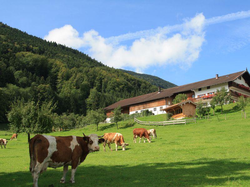 92631-Ferienwohnung-4-Bad Feilnbach-800x600-0