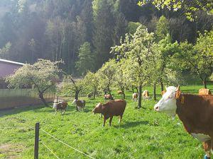 18121293-Ferienwohnung-4-Bad Feilnbach-300x225-2