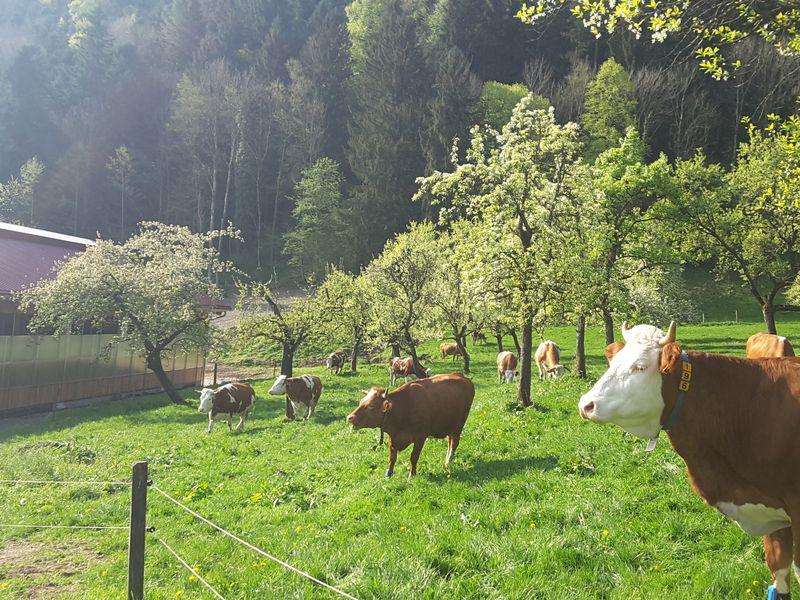 18121293-Ferienwohnung-4-Bad Feilnbach-800x600-2