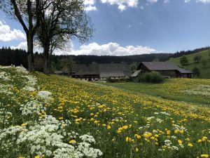 Ferienwohnung für 2 Personen ab 70 € in Breitnau