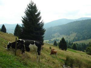 21472675-Ferienwohnung-4-Dachsberg-300x225-18
