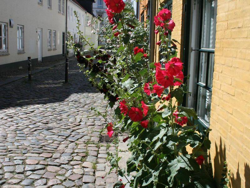 Red rose flensburg