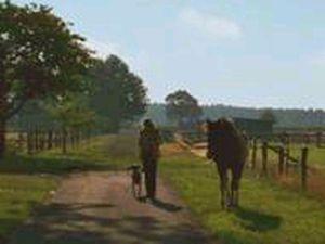 18705647-Ferienwohnung-4-Frankenfeld-300x225-1