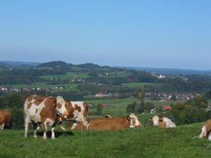 92540-Ferienwohnung-4-Frasdorf-300x225-1