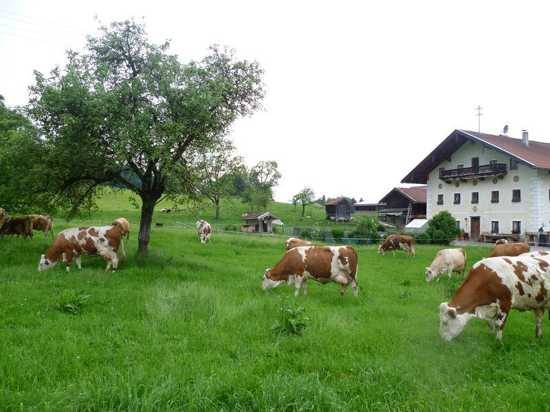 19273689-Ferienwohnung-4-Frasdorf-800x600-9