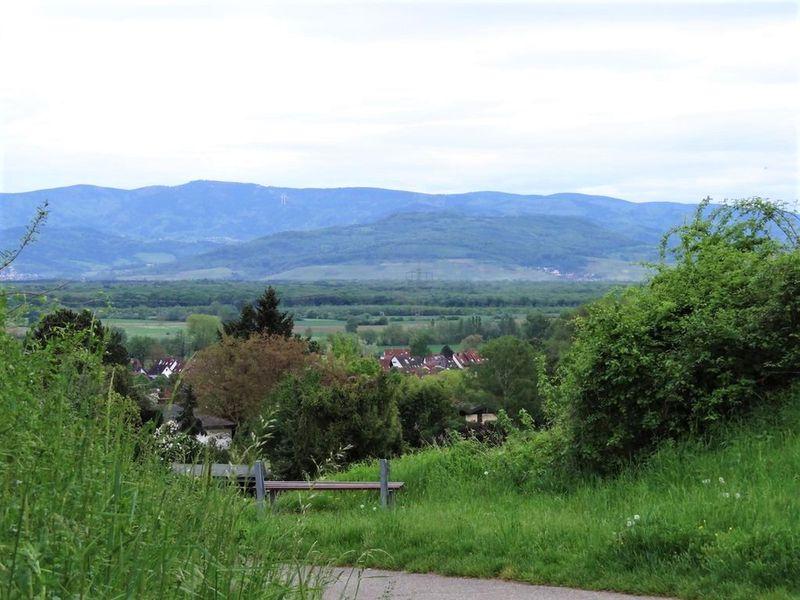 21919513-Ferienwohnung-5-Freiburg im Breisgau-800x600-11