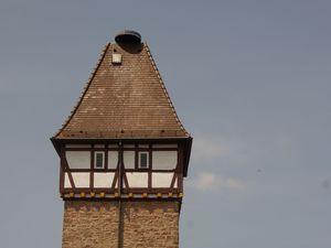 19188828-Ferienwohnung-6-Gernsbach-300x225-5