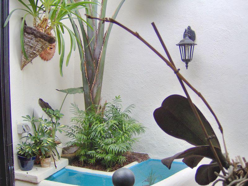 19365675-Ferienwohnung-2-Icod de los Vinos-800x600-37