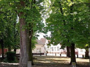 18190529-Ferienwohnung-4-Knittelsheim-300x225-2
