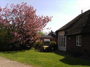 Ferienwohnung für 3 Personen (50 m²) ab 70 € in Morsum (Sylt)