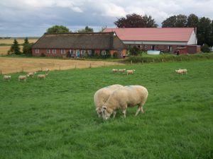 Ferienwohnung für 5 Personen (55 m²) ab 59 € in Neufelderkoog