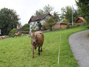 Ferienwohnung für 3 Personen (40 m²) ab 87 € in Neukirch (Egnach)