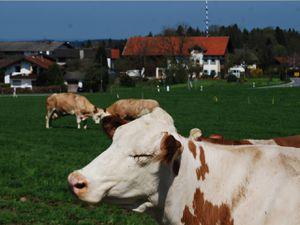 18354474-Ferienwohnung-4-Riedering-300x225-20