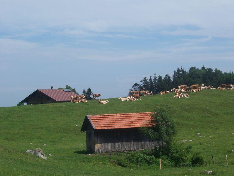 18196553-Ferienwohnung-4-Samerberg-800x600-14