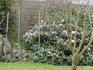 15595087-Ferienwohnung-3-Stein (Probstei)-300x225-3