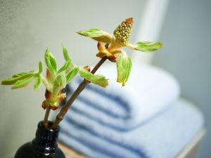 22048963-Ferienwohnung-2-Thiessow-300x225-18