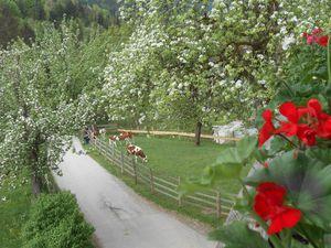 17940044-Ferienwohnung-7-Vorderthiersee-300x225-4