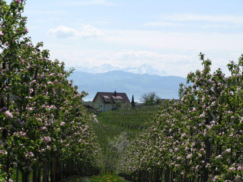 18596925-Ferienwohnung-4-Wasserburg am Bodensee-800x600-2