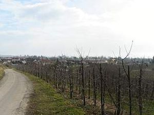 18629513-Ferienwohnung-6-Wasserburg am Bodensee-300x225-20