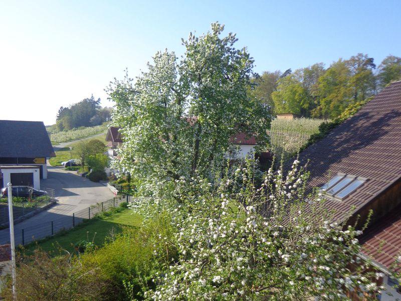 18629513-Ferienwohnung-6-Wasserburg am Bodensee-800x600-29