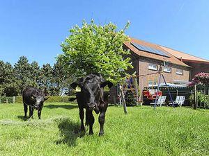 Ferienwohnung für 5 Personen (63 m²) ab 40 € in Westerholt