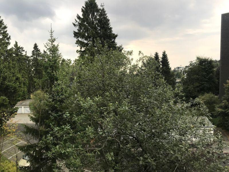 19978121-Ferienwohnung-4-Winterberg-800x600-5